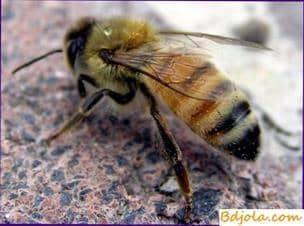 Consejos para un apicultor principiante