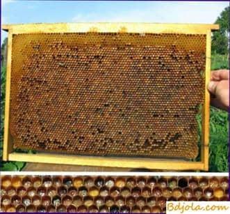 Miel y Perga como alimento de las abejas