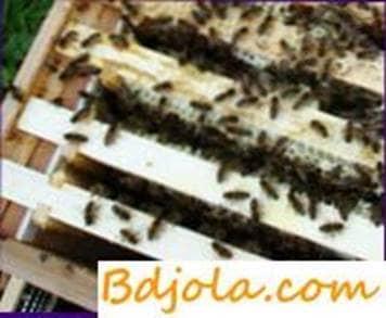Cómo arreglar familias de abejas débiles en la primavera