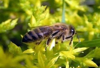 Base de alimentación de la apicultura y medidas para expandirla y mejorarla