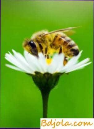 Composición química de la miel