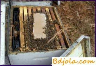 Cómo colocar marcos de popa en colmenas para el invierno