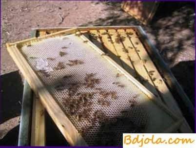 La primera inspección de primavera de las abejas