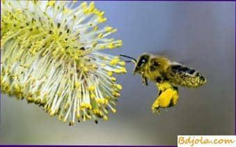 Cómo preparar pergu y polen para alimentar abejas