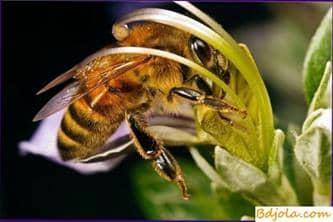 Contabilizando la condición y el tiempo de la miel