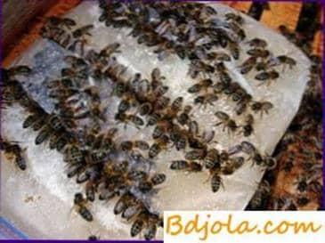 Alimentando abejas