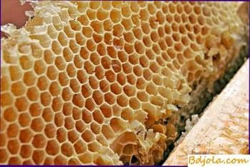 Cosecha, almacenamiento y uso de panales de miel