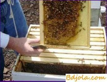Inspección de colonias de abejas