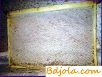 Prevenir la cristalización de la miel en panales