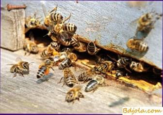 Ataque o robo de abejas