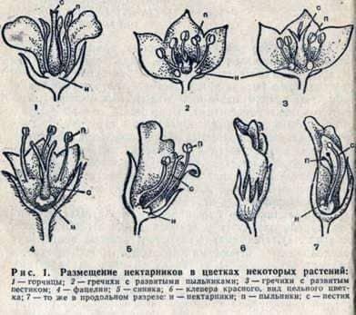 Asignación de flores de néctar de plantas de miel