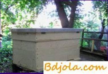 El contenido de las abejas en las colmenas tumbonas