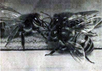 Las abejas viven de familias