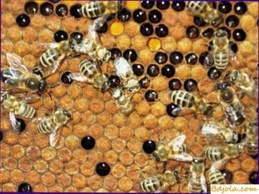 Nacimiento de una familia de abejas
