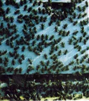 Organización de una nueva familia de abejas