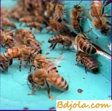 Comportamiento de los ladrones de abejas