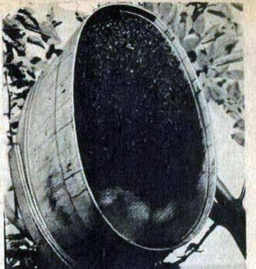 Cómo eliminar un enjambre