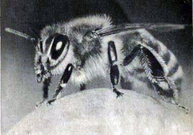 Cómo obtener miel silvestre