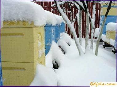 En invierno, las abejas necesitan paz