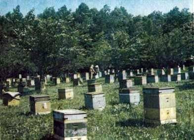 Cómo comportarse con las abejas