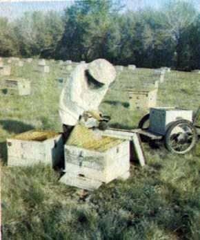 Cómo aumentar el apiario