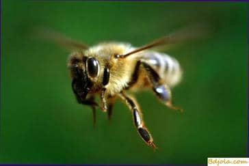 Lo que molesta a las abejas
