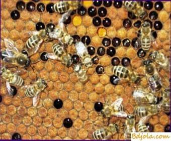 Que abejas plantar