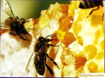 Passechnye productos de la apicultura