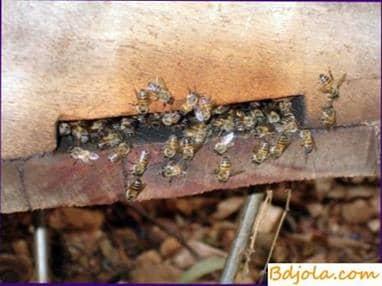 La composición de la cera de abejas