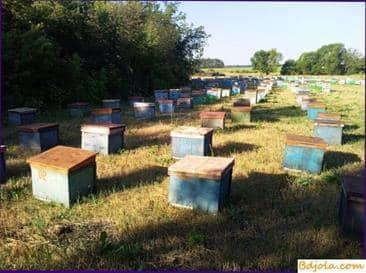 La productividad de cera del apiario