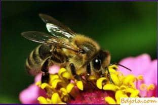 Lugares de tratamiento por picaduras de abeja