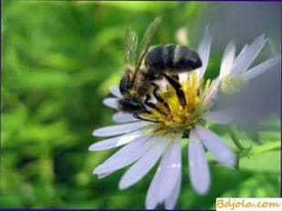 Hacer veneno con las abejas
