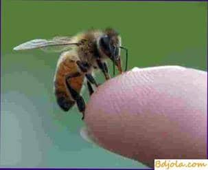 Ayuda con el envenenamiento con veneno de abeja