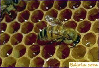 Sustancias antibacterianas en miel de abeja