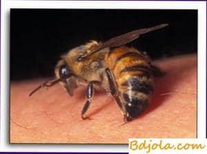 Perspectivas para el tratamiento con veneno de abeja