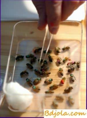 Métodos de uso terapéutico del veneno de abeja