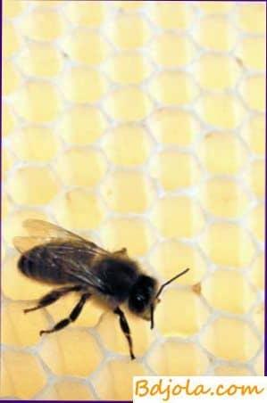 Composición química del veneno de abeja