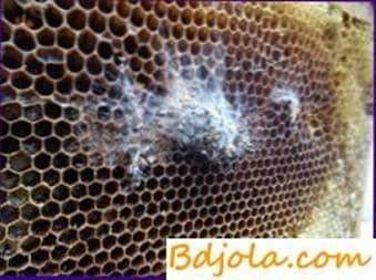 Desinfección de marcos celulares