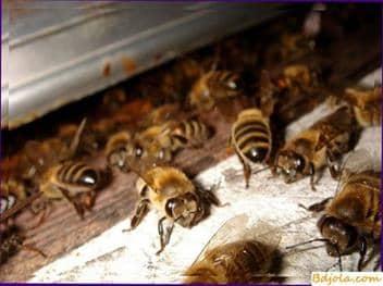 Cómo hacer una cámara de calor para procesar las abejas