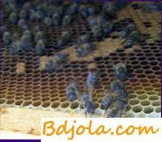 Melanosis de las abejas