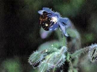 Enemigos y enfermedades de las abejas