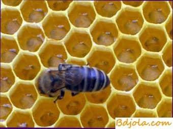 Toxicosis de néctar de las abejas