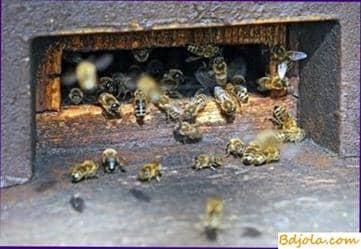 Parálisis de las abejas