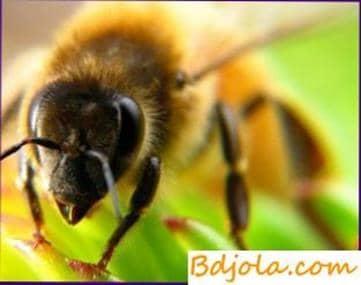 Toxicosis química de las abejas