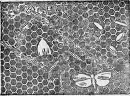 Enemigos y plagas de las abejas