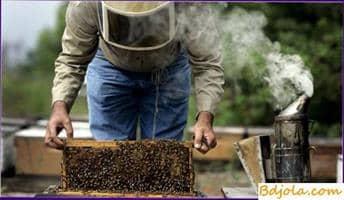 Examen de colonias de abejas