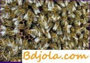 Procesamiento de abejas por folbeks