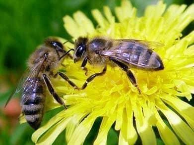 La falta de útero y miel
