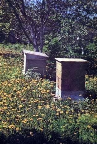 Casa de abejas
