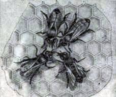 ¿Cómo hablan las abejas entre sí?